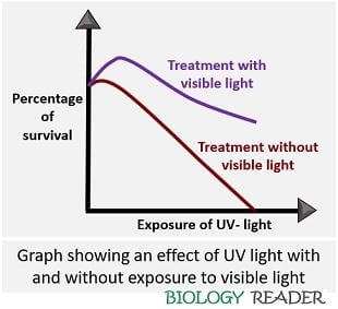 graph showing effect of UV light on DNA