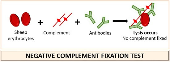 negative complement fixation test