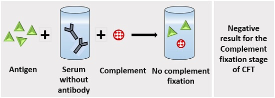 negative result for the complement fixation stage