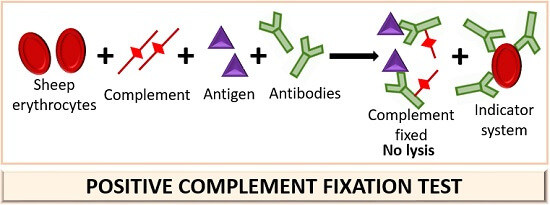 positive complement fixation test