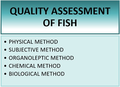 quality assessment of fish