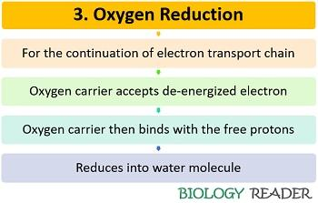 Oxygen reduction in ETS
