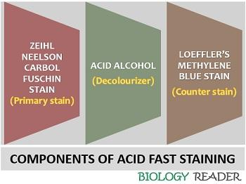 components of acid fast stain