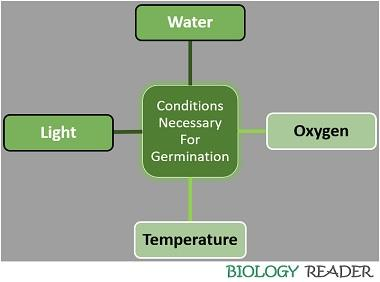 conditions necessary for germination