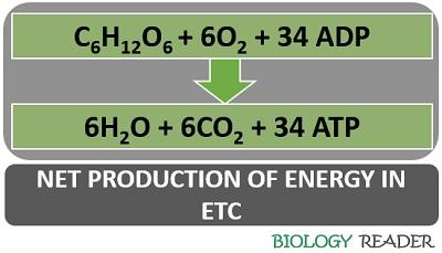 net production in ETC
