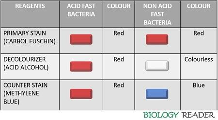 observation of acid fast stains
