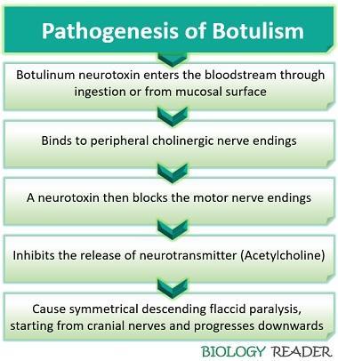 pathogenesis of botulism