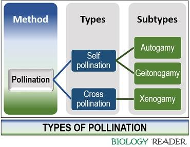 pollination types