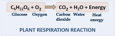respiration reaction