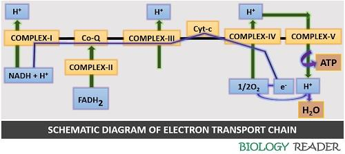 schematic diagram of ETC