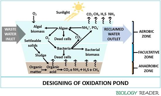 oxidation pond design