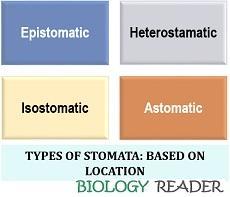 types of stamoata based on location