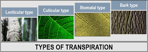 types of transpiration