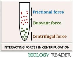Interacting forces in centrifugation