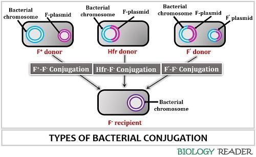 Methods of bacterial conjugation