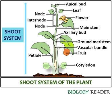 Shoot system