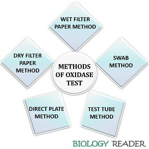 Methods of oxidase test