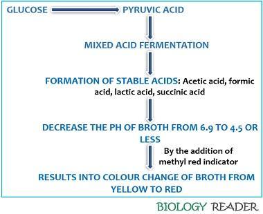 principle of methyl red test