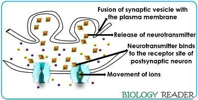 Role of neurotransmitters