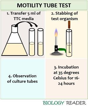 Tube motility test