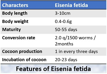 features of Eisenia fetida