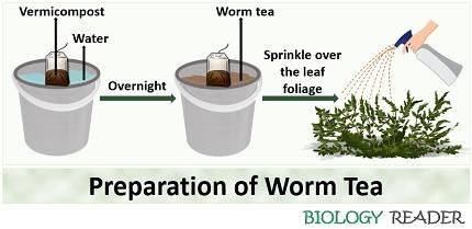 preparation of worm tea