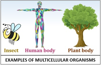 Examples or types of multicellular organisms