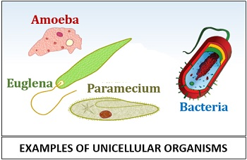 Examples or types of unicellular organisms