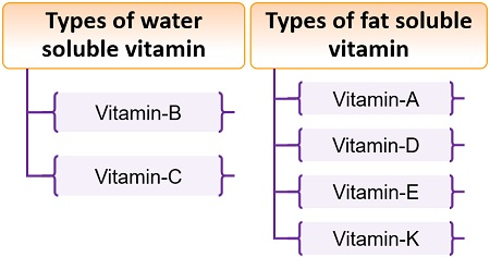 Types of water and fat-soluble vitamins