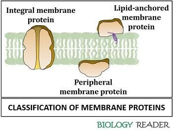 classification of membrane proteins