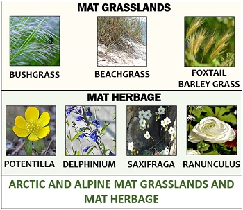Arctic and Alpine mat grassland and mat herbage