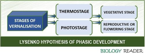 Lysenko hypothesis of phasic development