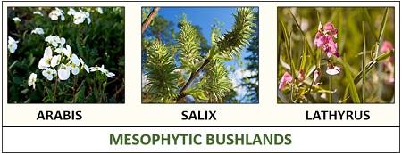 Mesophytic bushlands