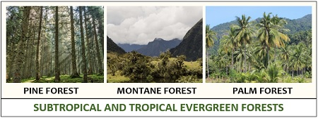 Tropical and subtropical evergreen forest