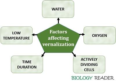 factors affecting vernalization