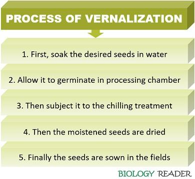 process of vernalization