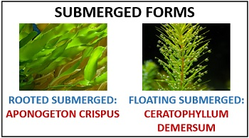 submerged form of macrophytes