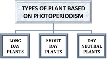 types of plant based on photoperiodism
