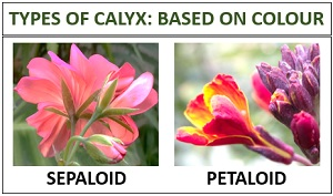 types of sepal based on colour