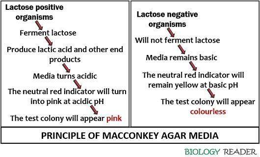 Principle of MacConkey agar media