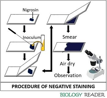 Procedure of negative staining