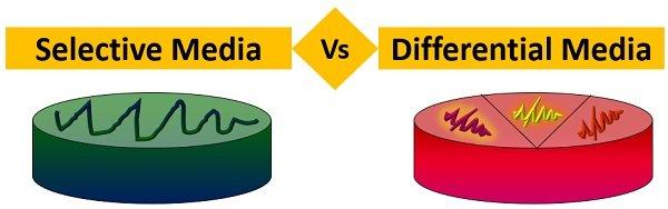 selective vs differential media diagram