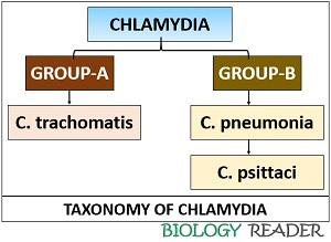 taxonomy of chlamydia