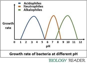 Bacterial growth at different ph