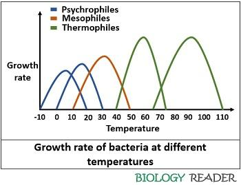 Bacterial growth at different temperatures