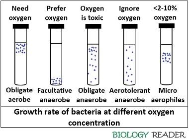 Growth of bacteria at different oxygen concentration