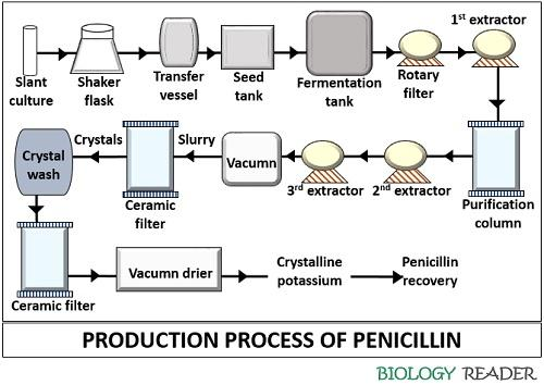 production process of penicillin