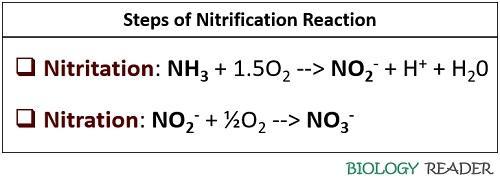 Steps of nitrification