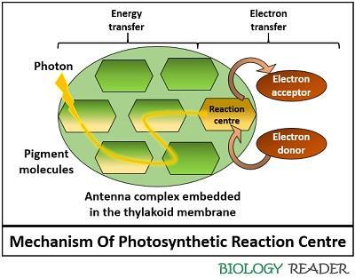 mechanism pf reaction centre