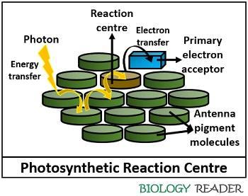 photosynthetic reaction centre